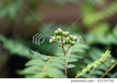 산초 열매 65554798