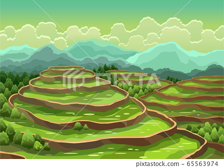 Landscape of rice field terraces. Asian rural background. Agriculture harvesting cereals or tea 65563974