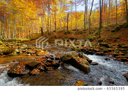 Mountain river in autumn forest. autumn landscape. 65565395