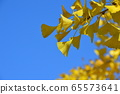ใบของท้องฟ้าสีฟ้า·แปะก๊วย biloba (Chichibu Muse Park / เมือง Chichibu จังหวัดไซตะมะ) 65573641