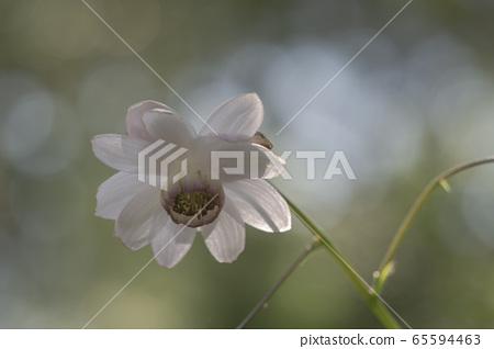 고원의 꽃 65594463