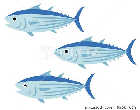 鰹魚圖 65594658