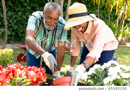 Senior African American couple planting flowers in their garden . 65595150