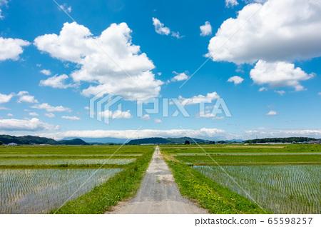 水稻種植農村春藍天 65598257