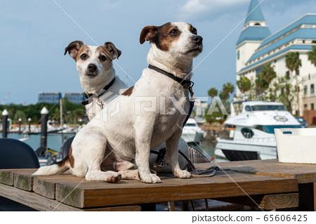碼頭邊的小狗 動物 狗狗 漁人碼頭 犬 65606425