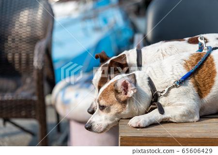 碼頭邊的小狗 動物 狗狗 漁人碼頭 犬 65606429