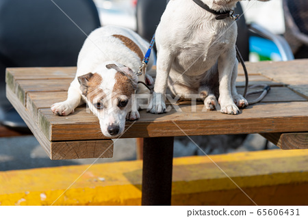 碼頭邊的小狗 動物 狗狗 漁人碼頭 犬 65606431