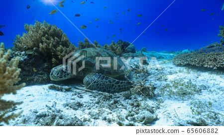睡美麗的烏龜 65606882