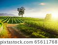Beautiful sunny day at grape plantation in Greece 65611768