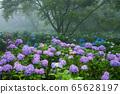 繡球花的繡球花 65628197