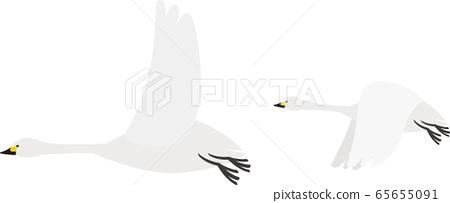 Animal Swan Swan 65655091