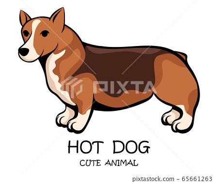 Vector illustration cartoon on a white background of a cute corgi dog 65661263