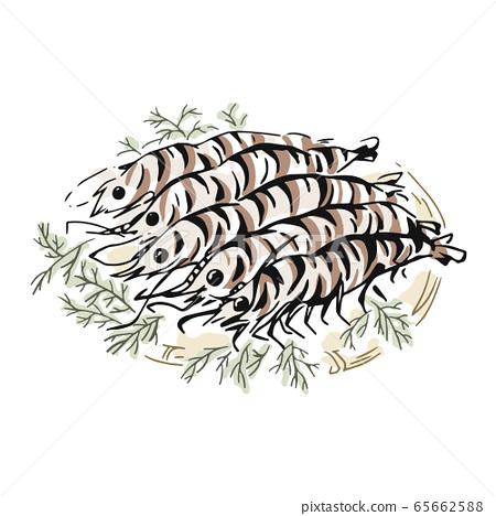 大蝦手繪插圖 65662588