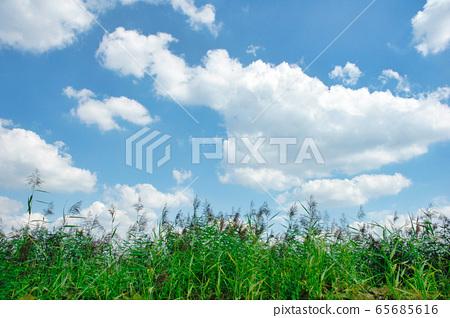 德國漢堡天空 65685616