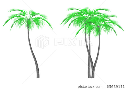 Palm tree plant cutout for synthesis 65689151