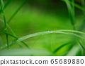 Steppe raindrops 65689880