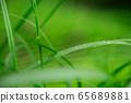 Steppe raindrops 65689881