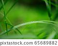 Steppe raindrops 65689882