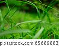 Steppe raindrops 65689883