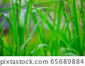 Steppe raindrops 65689884