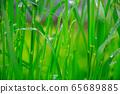 Steppe raindrops 65689885