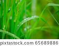 Steppe raindrops 65689886