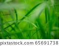 Steppe raindrops 65691738
