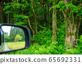Drive through the forest image 65692331