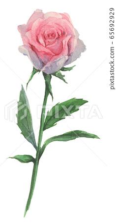 장미 수채화 손그림 일러스트 수제카드만들기  65692929