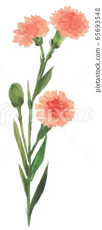 康乃馨花畫水彩手繪花圖 65693548