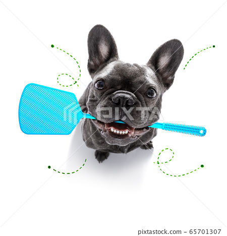 dog  with fleas, ticks or insects 65701307