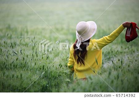 보리밭풍경,농장풍경 65714392