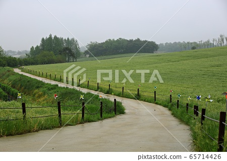 보리밭풍경,농장풍경 65714426