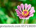 粉紅色的花朵 65719699