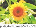 一個向日葵在夏天 65719729