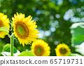 一個向日葵在夏天 65719731