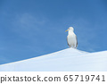 蓝天和海鸥 65719741