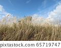米和蓝天 65719747