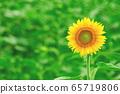 一個向日葵在夏天 65719806
