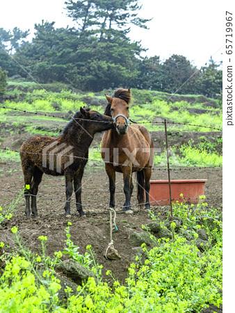 馬 65719967