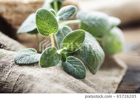 Fresh sage leaf 65726205