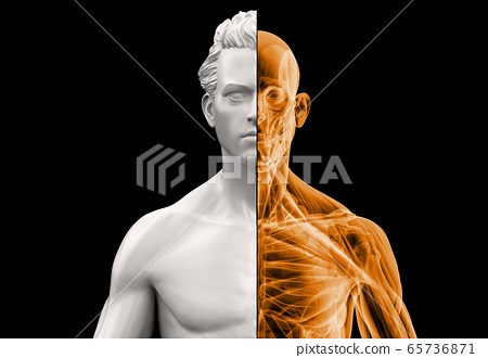 Anatomy man bust half x-ray. 65736871
