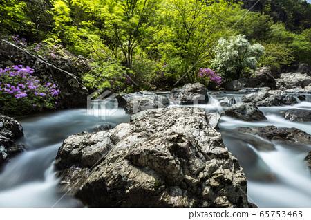 Mountain azaleas in the valley 65753463