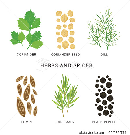 Set of Herbs and Spices. Organic and healthy food isolated element Vector illustration. 65775551