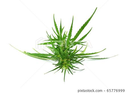 Fresh marijuana bud isolated on white background 65776999