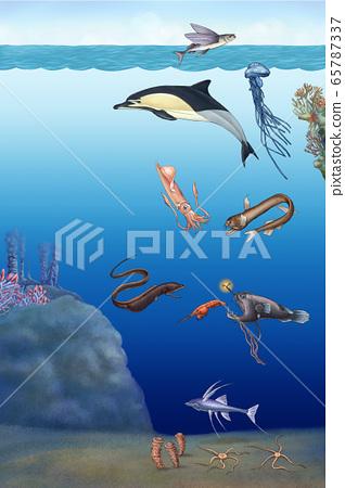 提炼海洋中的生物 65787337