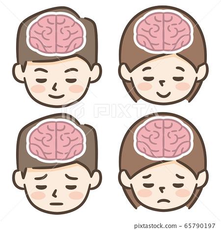 뇌 남성 여성 65790197