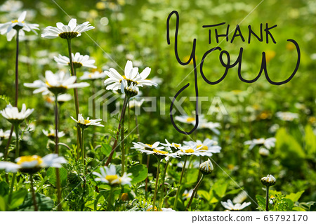 Daisy Flower Meadow, English Calligraphy Thank You 65792170