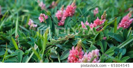 Green grass 65804545