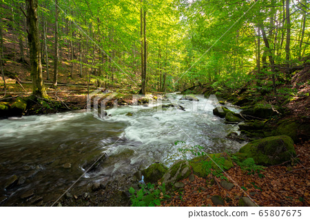 stream in the forest. beautiful nature background. 65807675
